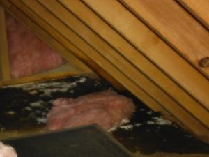 Roof Leaks discovered during an Energy Audit